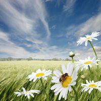 A méhek védelme – az emberiség védelme