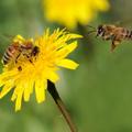 A méhek felépítése