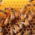 A méhcsaládok felépítése