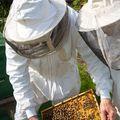 A méz útja - A kaptártól az asztalig