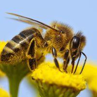 A méz útja - A virágtól a méhkaptárig