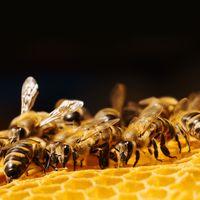 13 érdekesség a méz és a méhek világából
