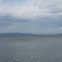 2. nap Preluk (Rijeka) - (Opatija) - (Labin) - Rabac
