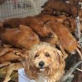 Kutyakín Kínában