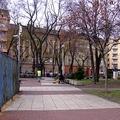 816. Klauzál tér - Kutyafuttató