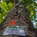 809. 650 fát akarnak kivágni