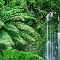 Irtsuk-e a brazil őserdőt?