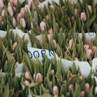 Ötperces pillanatok - Virágot tessék