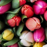 Egyperces pillanatok - Egy csokor virág