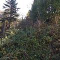 Dzsungelharc