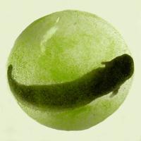 Fotoszintetizáló gerinces állatot fedeztek fel