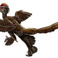 Anchiornis: a négyszárnyú dinoszaurusz