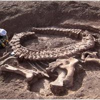Újabb hatalmas dinoszaurusz került elő Nigériából