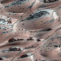 A nap képe: Fák a Marson