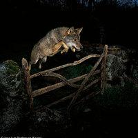 A nap képe: A mesekönyvek farkasa