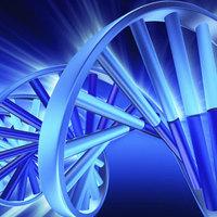 Megmérték az ember mutációjának sebességét