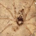 Őspókokat fedeztek fel Kínában
