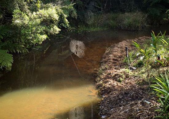 gigantikus pókháló egy patak felett
