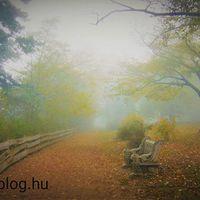 A novemberi ködöknek is van varázsa... sejtelmes #panoráma-sétány #fonyód #balatoni_fotók