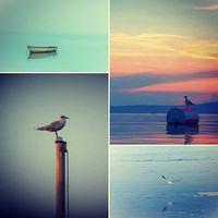 Pénteken ornitológus távcsövünket a sirályokra szegezzük #balatoni_fotók #dankasirály #küszvágócsér #madaras_hét
