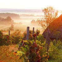 Reggeli ködök #osszelisbalaton #buzsák #szőlő #balatoni_fotók