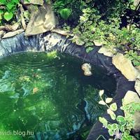 Víz a kertben - romantikus segítség madaraknak, bogaraknak
