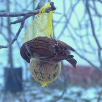 Élelem a rászorulóknak - madáretetés télen
