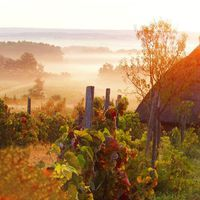 Jó reggelt! #napkelte #buzsák #hajnali_köd #szőlő #balatoni_fotók
