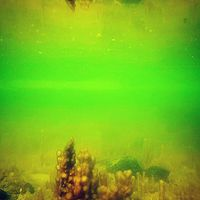 Mit rejt a #Balaton mélye? 1. Sellőkastély? 2.Vízipók kristálypalotája? 3. Jar Jar Binks városa? #balatoni_fotók #underwater