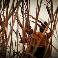 A reggeli szarvaskaland után most rénszarvast láttam a nádasban! :-)