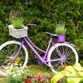 Kerti dekoráció levendularajongóknak avagy egy régi bicikli új élete