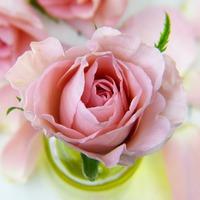 Bach virágok - érdektelenség a jelen eseményei iránt