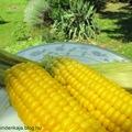 Főtt kukorica- ezt mindenki meg tudja csinálni