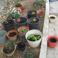 Tavaszi fűszerkert