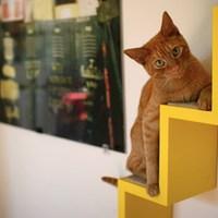 Macskabolond designerek