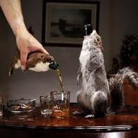 Újrahasznosított poszt: Igyál sört mókusból
