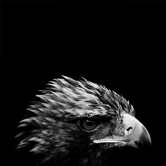 természetfotózás fekete-fehérben