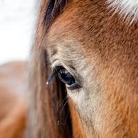 A lovaglás csökkenti a stresszt