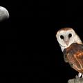 Az éjjeli munka öregíti az agyat és károsítja a működését