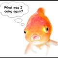 Megelőztek az aranyhalak!