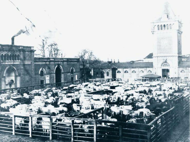 Közvágóhíd 1910.jpg