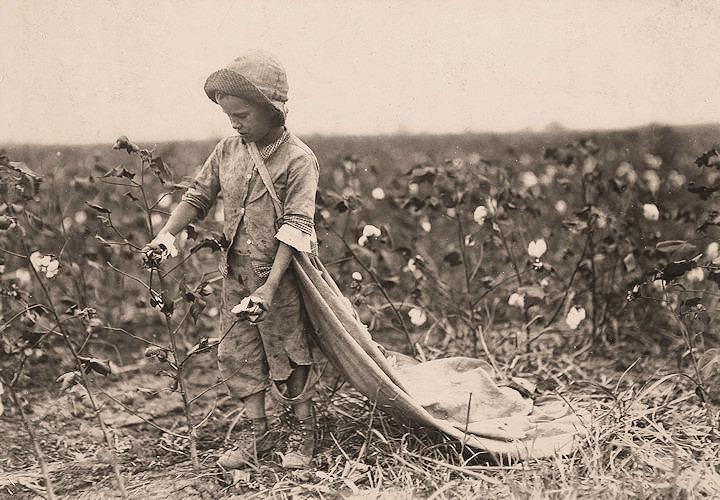 hine-cotton.jpg