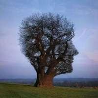 Egyedi fa