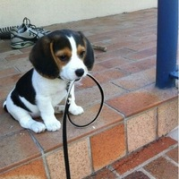 Mikor megyünk sétálni?