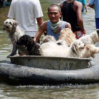 Megható kutyusmentés árvízben
