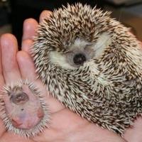 Süni anyu és a kicsi