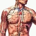 Hogyan is működik az immunrendszerünk?