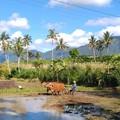 Az istenek zöld szigetén - Balin