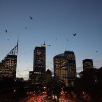 Hétköznapi szokatlanságok - Ausztrália