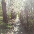 #miskolc #miskolcadhatott #miskolciegyetem #tavasz